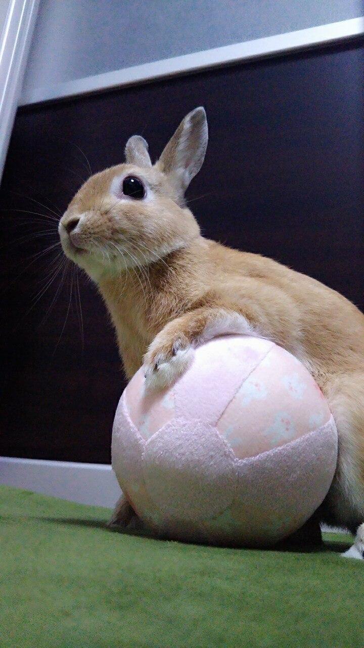 ひなのボール遊び♪