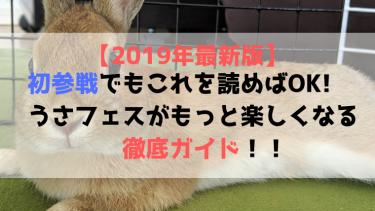 【2019年最新版】うさフェス参戦ガイド!うさぎ好きは絶対参加すべき!!